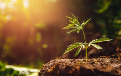 The Distinct Benefits of Legal Grow House Marijuana